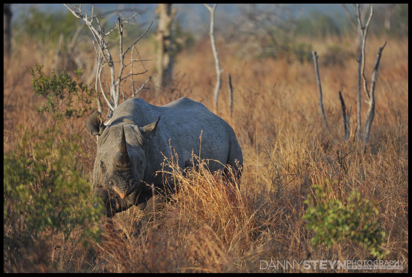wildlife photography wildlife photographer - Swaziland